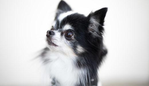 飼主さん必見!犬の鑑札や注射済票の簡単なつけ方と便利グッズのご紹介
