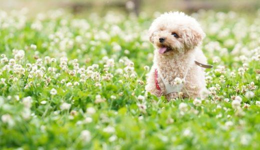 犬の届出は毎年必要なの?登録や届出が必要な場合と忘れた時の罰則